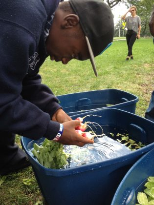 A participant in Groundwork Milwaukee's Young Farmers program washing harvested produce