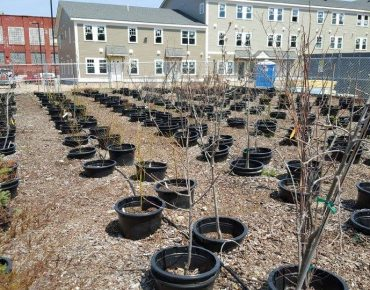 Saplings growing inside Hope Tree Nursery