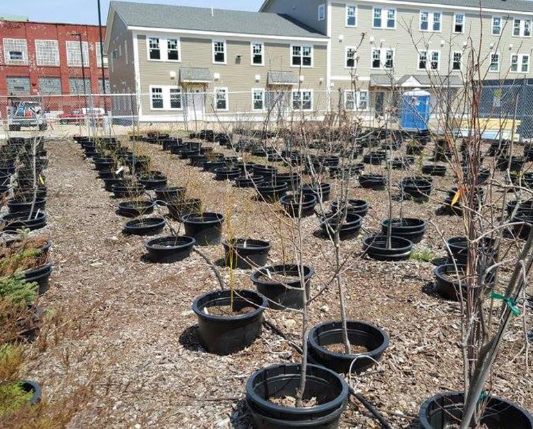 Growing the Hope Tree Nursery