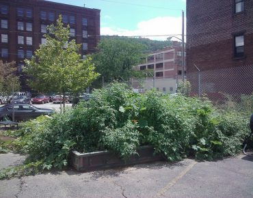 Urban Agriculture: Reclaiming Brownfields as Community Assets