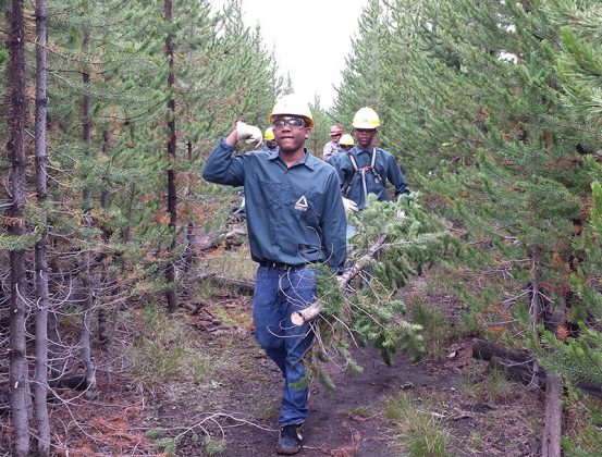 """Groundwork Anacostia River DC Green Team youth """"brushing"""" trails at Yellowstone National Park to improve visibility for hikers and reduce the risk of chance bear encounters."""