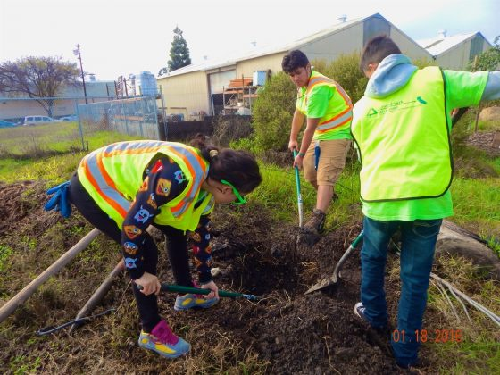 GW Richmond Green Team members plant trees along the Richmond Greenway