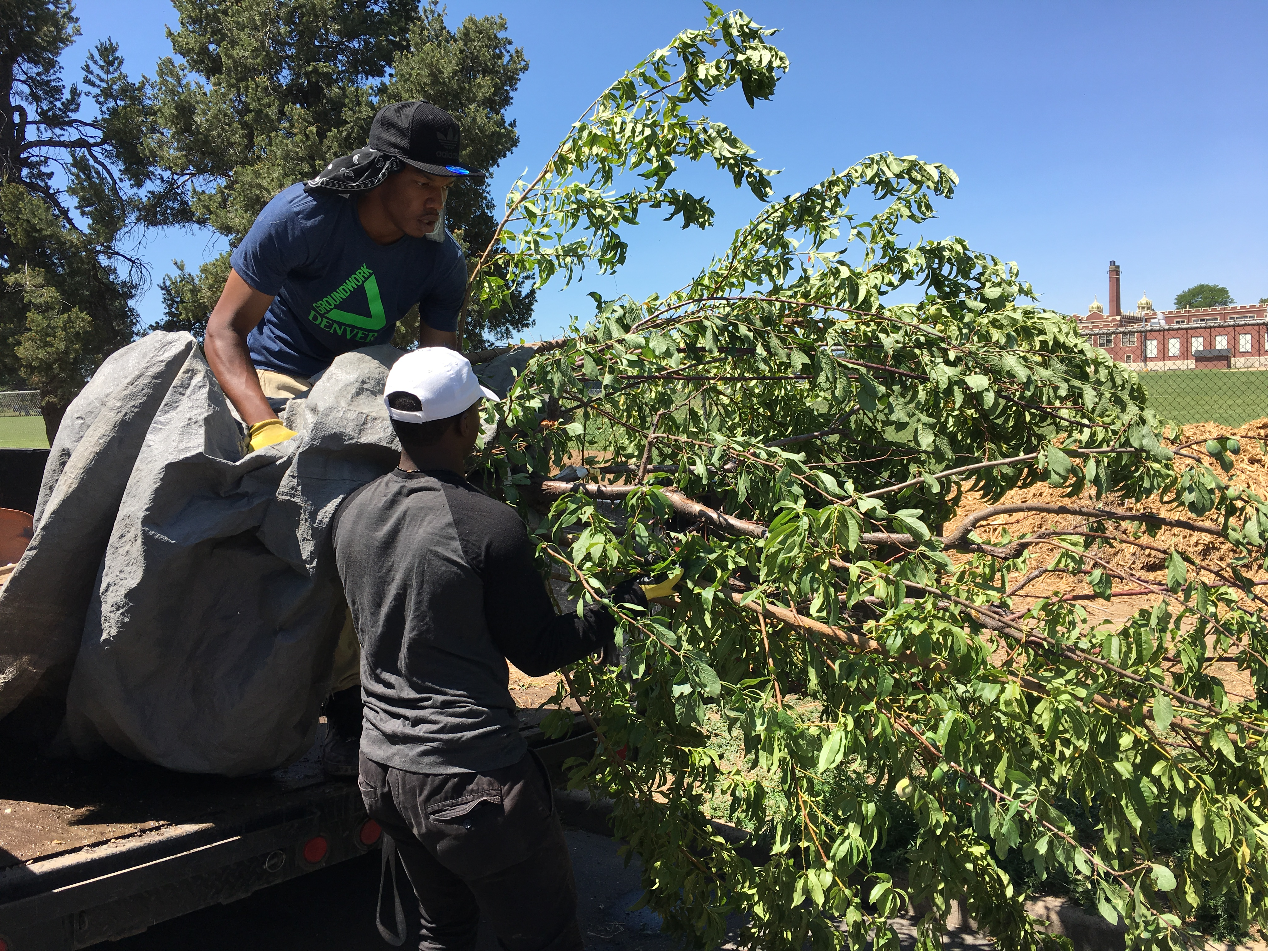 Jai_tree-planting-denver