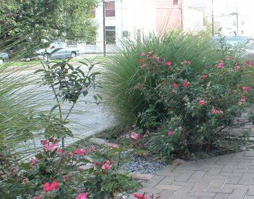 Groundwork New Orleans Rain Garden